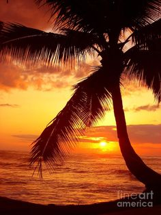 ✯ Tropical Paradise