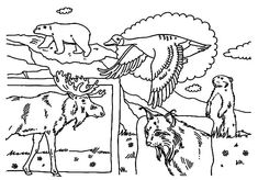 Perfect for Canada Day or any time you want to celebrate Canada, our colouring page features a collection of Canadian animals. Summer Coloring Pages, Flag Coloring Pages, Online Coloring Pages, Animal Coloring Pages, Printable Coloring Pages, Free Coloring, Coloring Pages For Kids, Coloring Books, Coloring Sheets