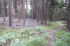 Landskapet - naturen - människan