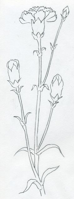 How To Draw Carnation