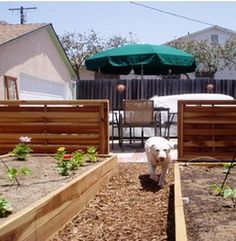 Simple Ways to Create a Dog Friendly Garden by Judi Gerber      Read more: http://www.care2.com/greenliving/simple-ways-to-create-a-dog-friendly-garden.html#ixzz2H7fCHkQF
