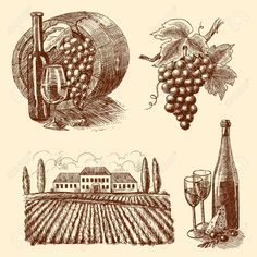 27944640-Wine-vintage-sketch-decorative-icons-set-of-barrel-grape-branch-winery-isolated-vector-illustration-Stock-Vector.jpg (1300×1300)