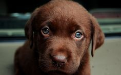 Forrest London - puppy picture full hd - 2560x1600 px