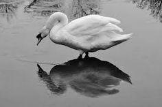 Reflection Condensing - Google 検索
