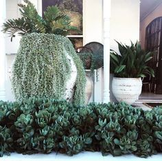 Modish back garden fencing ideas pictures only in kennyslandscaping.com Outdoor Landscaping, Outdoor Plants, Front Yard Landscaping, Outdoor Gardens, Landscaping Ideas, Landscaping Melbourne, Tropical Landscaping, Succulents Garden, Planting Flowers