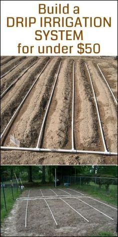 """Need a drip irrigation system in your vegetable garden? Here's a project for you! """"Break-Through Organic Gardening Secret Grows You Up To 10 Times The Plants, In Half The Time, With Healthier Plants, While the """"Fish"""" Do All the Work. Gardening Zones, Hydroponic Gardening, Hydroponics, Container Gardening, Vegetable Gardening, Aquaponics Diy, Veggie Gardens, Aquaponics System, Garden Care"""