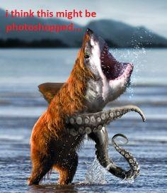 Funny shark bear octopus