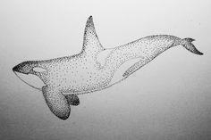 orca - my sketch