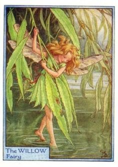 $24.95 Willow Tree Fairy by Cicely Mary Barker #fairy #tree #willow #barker #illustration #art by tamika