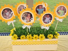 What a cute way to display your babies pictures for a 1st Birthday Party!