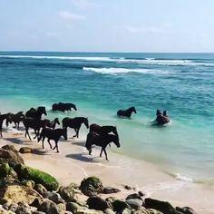 🔥 Wild horses enjoy the ocean - Tiere - Animais Cute Horses, Pretty Horses, Horse Love, Funny Animal Videos, Cute Funny Animals, Cute Baby Animals, Nature Animals, Animals And Pets, Wildlife Nature