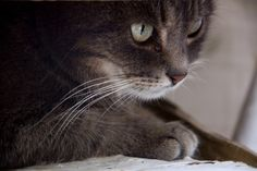 """""""Cats are mysterious kind of folk.  There is more passing in their minds than we are aware of."""" --Sir Walter Scott"""