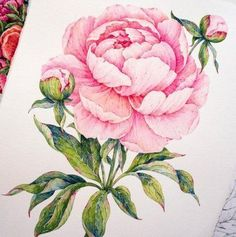 18 ideas flowers illustration watercolor artists for 2019 Peony Drawing, Peony Painting, Drawing Artist, Drawing Flowers, Watercolor Artists, Watercolor Flowers, Watercolor Paintings, Tattoo Fleur, Flowers Wallpaper