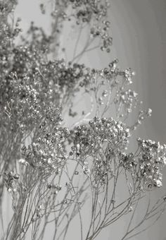 Very much like baby's breath. Use this stunning silver broom bloom as a bouquet and centerpiece filler. These branches are each air dried. This bunch measures to tall by wide. Aesthetic Colors, White Aesthetic, Aesthetic Pictures, Wedding Centerpieces, Wedding Decorations, Silver Home Accessories, Black And White Photo Wall, Décor Antique, Silver Walls