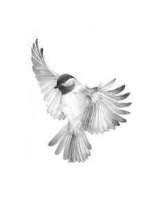 bird III by adorables funny graciosos hermosos salvajes tatuajes animales Pencil Art Drawings, Bird Drawings, Animal Drawings, Tattoo Drawings, Drawing Sketches, Drawing Tips, Easy Drawings, Chickadee Tattoo, Easy Drawing Tutorial