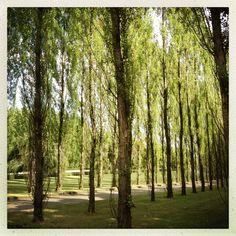 Bäume :)