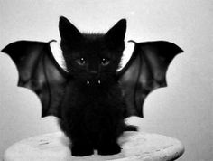 kitten+vampire+bat+halloween+.jpg (500×378)