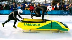 jamaican bobsled team 2014   Jamaica Bobsled Team Crowdfunds On Their Way to Olympics