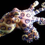 octopus facts - for fortune cookies