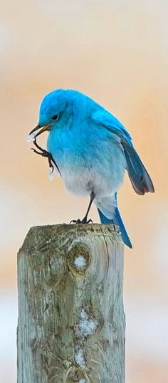 gorgeous color bird