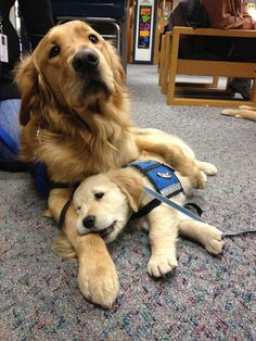 Les photos de ces chiens inséparables vont vous donner du baume au coeur !