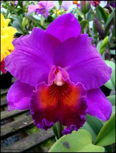 Orchid and Flowers Rare Orchids, Purple Orchids, Purple Flowers, Unusual Flowers, Amazing Flowers, Beautiful Flowers, Types Of Orchids, Types Of Flowers, Tropical Flowers