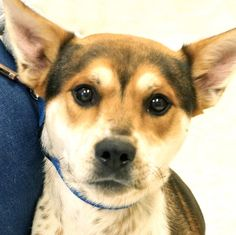 SCRAPPY  has been adopted!