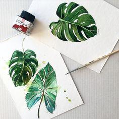 Monstera ) watercolor . Ботаника. Иллюстрация.