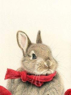 : animals, bunny, and wallpaper image Funny Bunnies, Baby Bunnies, Cute Bunny, Hunny Bunny, Animals And Pets, Baby Animals, Cute Animals, Animal Pictures, Cute Pictures