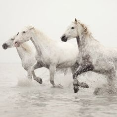 The sight of running horses makes me want to cry with joy. This photographer is AMAZING! (via eye poetry)