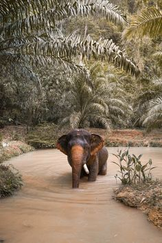 Your ultimate travel guide to Khao Sok National Park – AndSheXplores Wild Elephant, Asian Elephant, Elephant Love, Cute Little Animals, Cute Funny Animals, Nature Animals, Animals And Pets, Wild Animals, Jungle Man