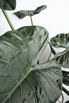 Plant / Life / Green / Grow / Botanic