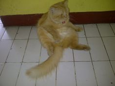 Mochii,,My Cat