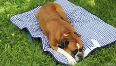 Original Territory Travel Blanket for Dogs Review