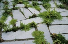 irregular paver stepping stones with plants between. repinned by falon land studio. www.falonland.com