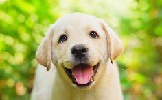 Come far vivere il tuo cane felice e più a lungo