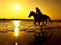 We love horses for what they embody: freedom, spirit, adventure, peserverance, and drive.