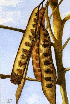 Seed Pods Paintings for Sale