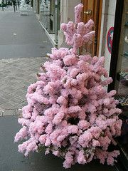 ~tiny pink Christmas tree in Paris ~*