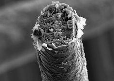 Broken Strand of Hair Under A Microscope