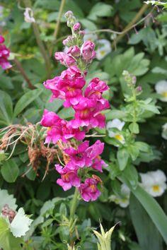 http://fishtailcottage.blogspot.com/