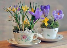 teacups as planters-great way to display them