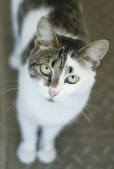 ce chat a des yeux magnifiques!