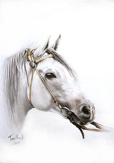 Horse Portrait Print By Tamer Elsharouni. Perfect match for my living room decor.