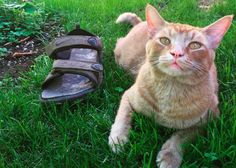 Life as a cat burglar isn't easy. But it's probably a cinch when you're literally a cat who steals. Snorri Sturluson is a cat who lives with his human, Gabbi Hendel in Portland, Oregon. He's a cute, orange tabby, who suffers from a very bad habit: stealing.