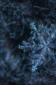 Macro Photography of Snowflake Snowflake Wallpaper, Cute Wallpaper Backgrounds, Pretty Wallpapers, Snowflake Photography, Winter Photography, Macro Photography, Winter Photos, Winter Beauty, Winter Wonder