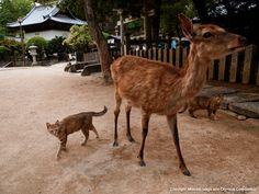 デジタル岩合 動物写真家・岩合光昭 日本デジタルフォトギャラリー