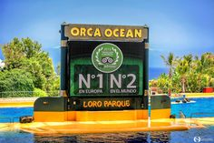 Part Orca Show. Ocean Park, Orcas, Antibes, Sea World, Tenerife, Trip Advisor, Aquarium, Goldfish Bowl, Killer Whales