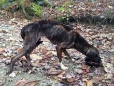 Justice for Ziva, Pennsylania dog abandoned in the woods! | YouSignAnimals.org