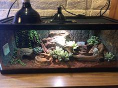 Leopard Gecko Setup, Leopard Gecko Habitat, Leopard Gecko Care, Reptile Habitat, Reptile Room, Reptile Cage, Leopard Gecko Terrarium, Terrarium Reptile, Les Reptiles